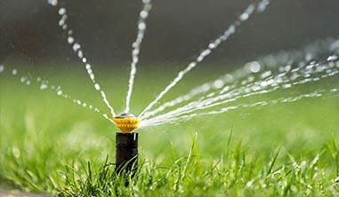 jak pielęgnować trawnik z rolki